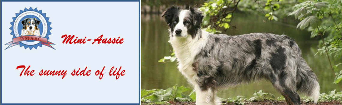Mini-Aussie - The sunny side of Life